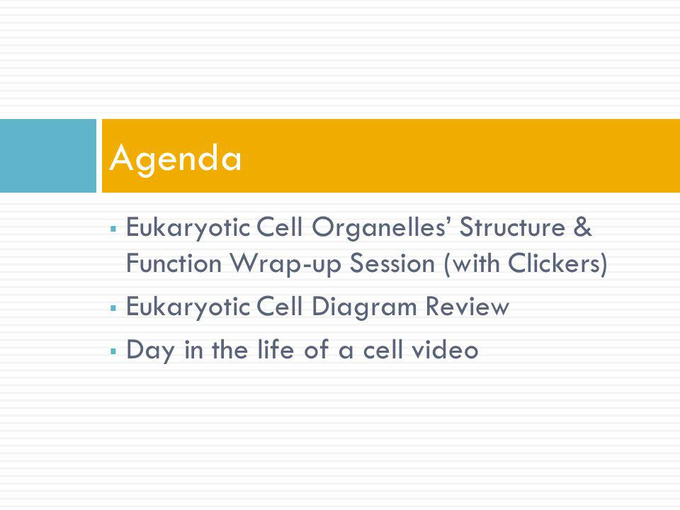 Agenda Eukaryotic Cell Organelles' Structure & Function Wrap-up Session (with Clickers) Eukaryotic Cell Diagram Review.