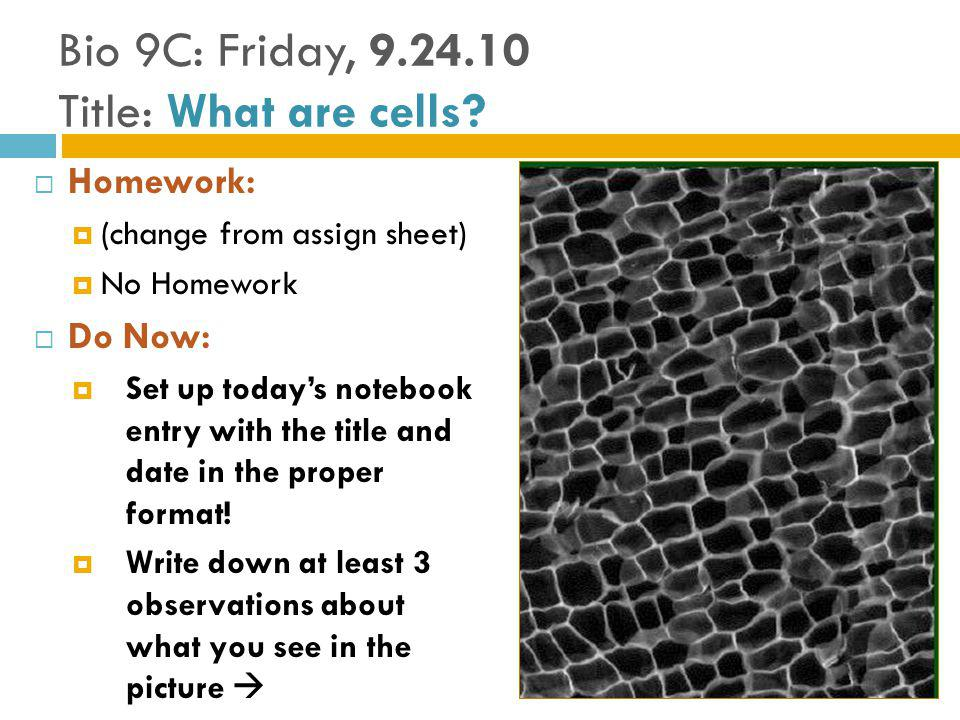 Bio 9C: Friday, 9.24.10 Title: What are cells