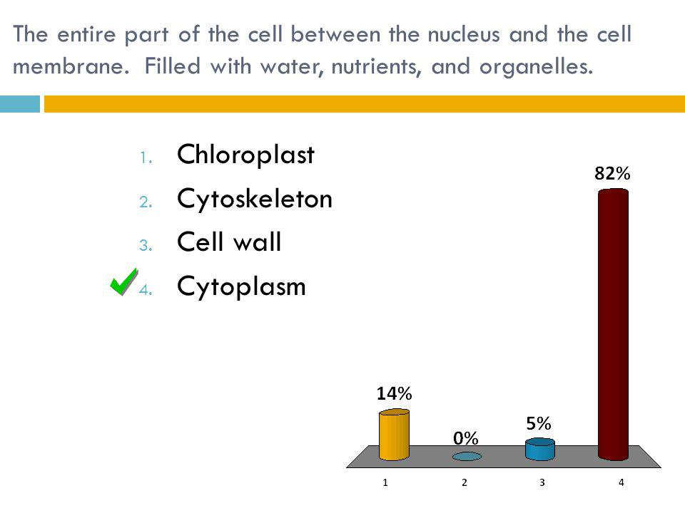 Chloroplast Cytoskeleton Cell wall Cytoplasm