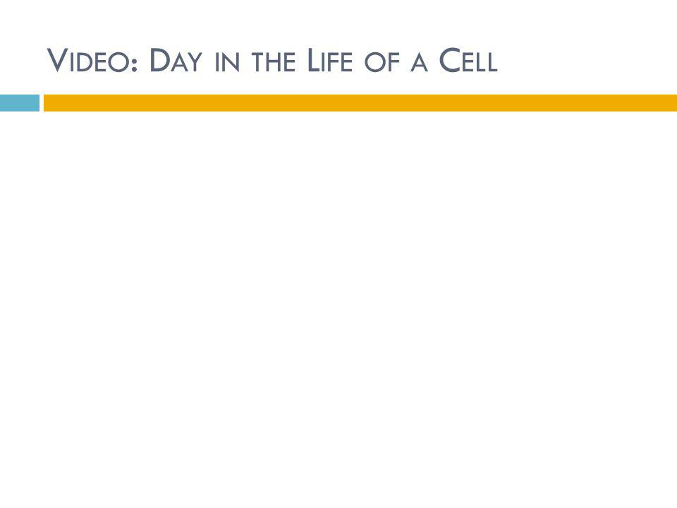Video: Day in the Life of a Cell