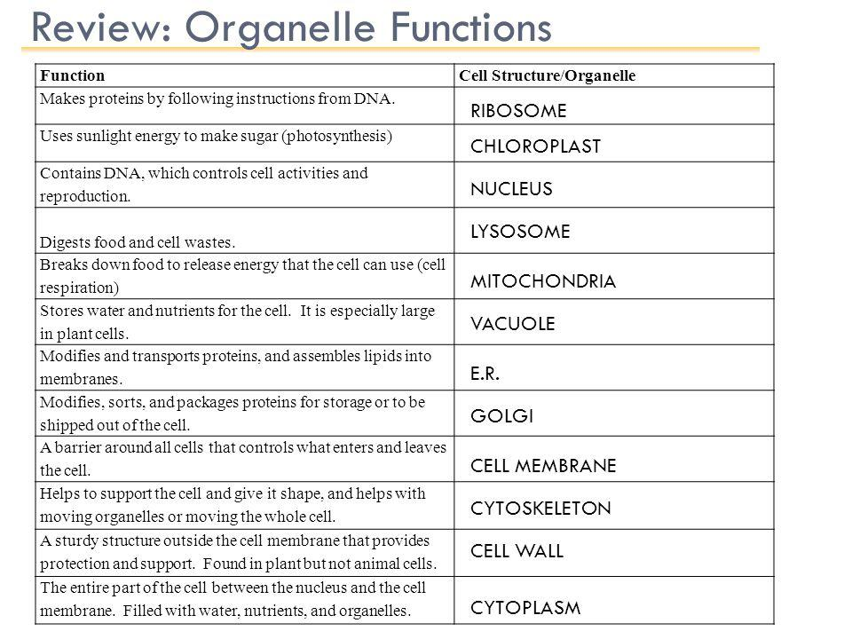 Review: Organelle Functions