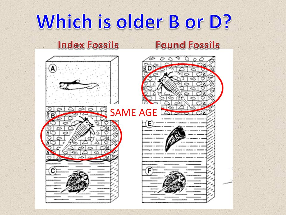 Which is older B or D Index Fossils Found Fossils SAME AGE