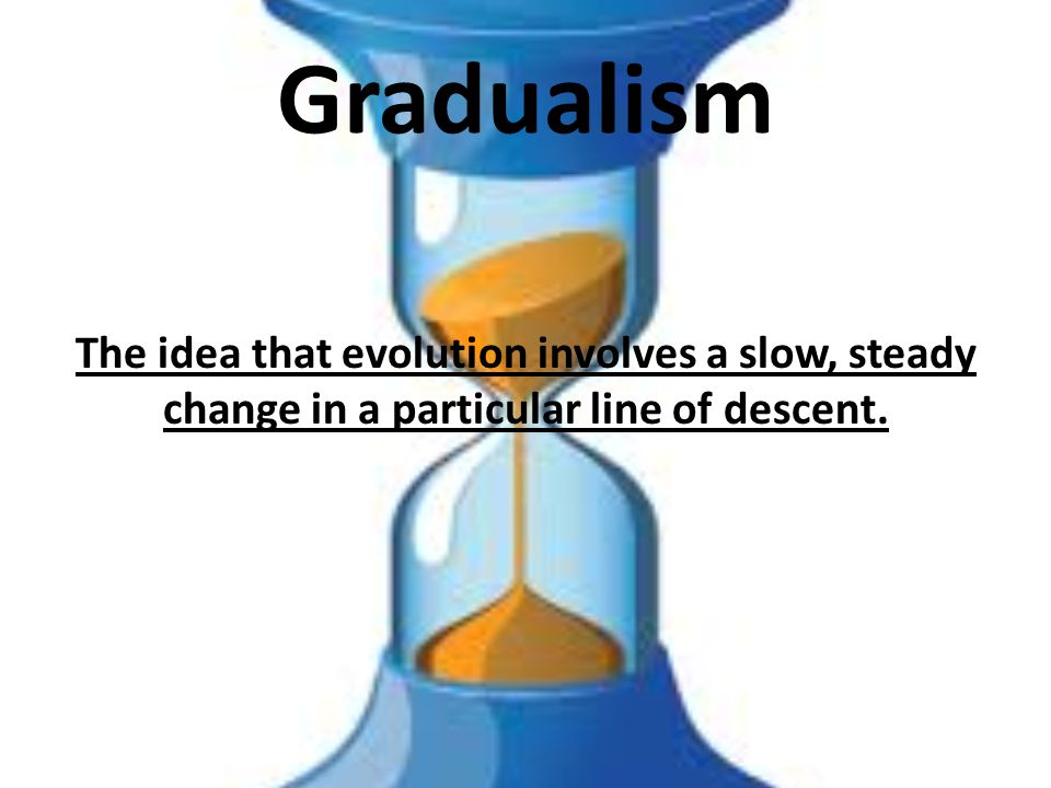 Gradualism The idea that evolution involves a slow, steady change in a particular line of descent.