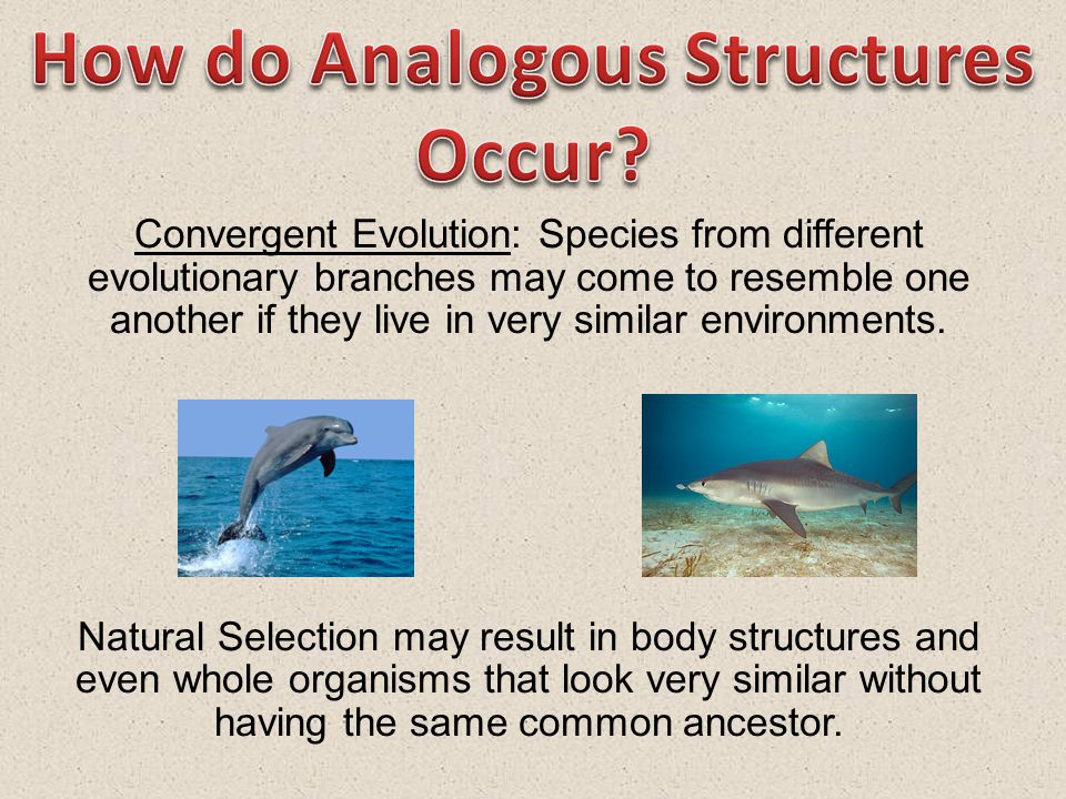 How do Analogous Structures Occur