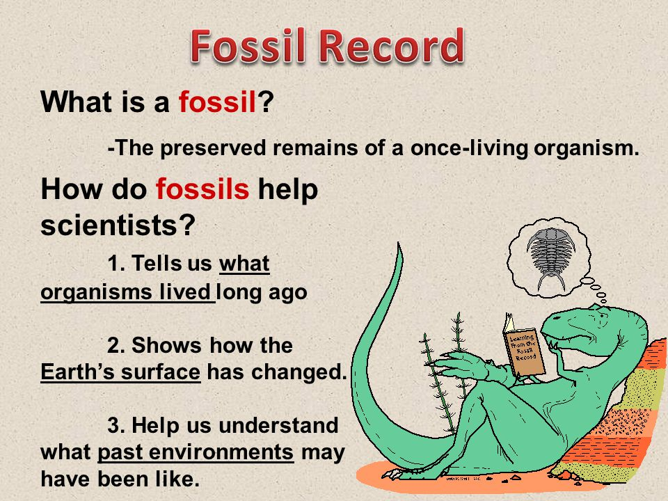 Fossil Record What is a fossil -The preserved remains of a once-living organism. How do fossils help scientists