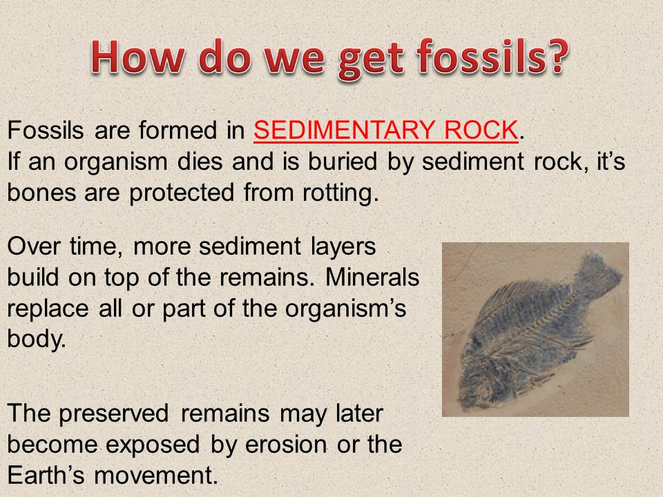 How do we get fossils Fossils are formed in SEDIMENTARY ROCK.