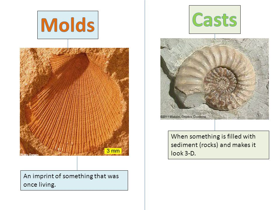 Casts Molds. When something is filled with sediment (rocks) and makes it look 3-D.