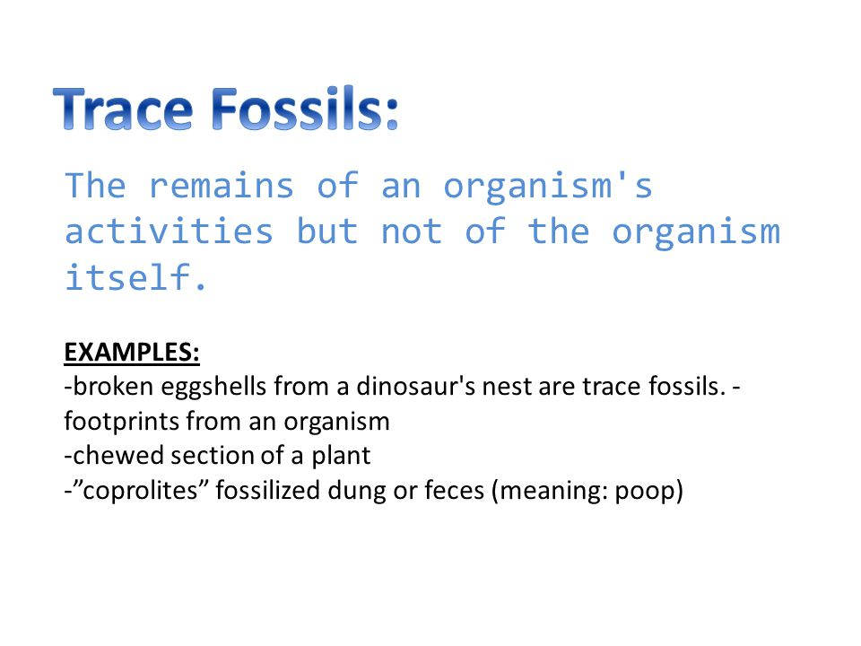 Trace Fossils: The remains of an organism s activities but not of the organism itself. EXAMPLES: