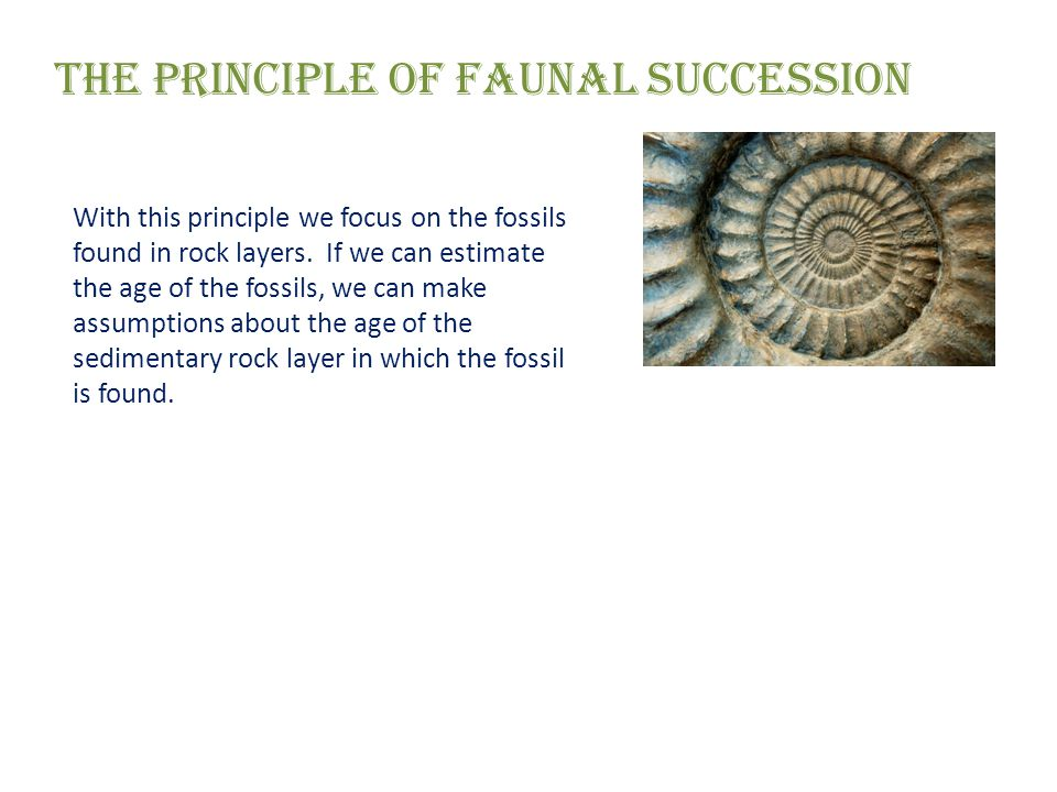 The Principle of Faunal Succession