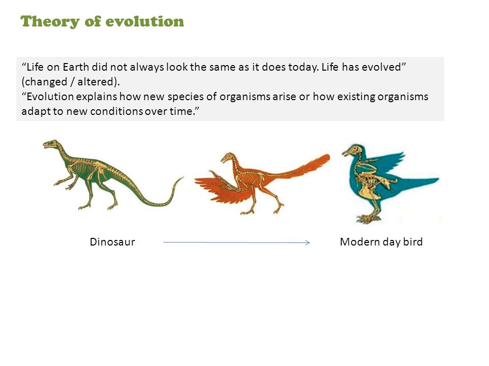 Theory of evolution Life on Earth did not always look the same as it does today. Life has evolved (changed / altered).