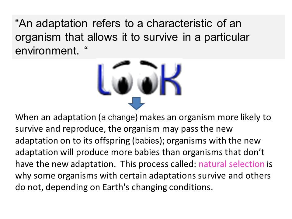 An adaptation refers to a characteristic of an organism that allows it to survive in a particular environment.