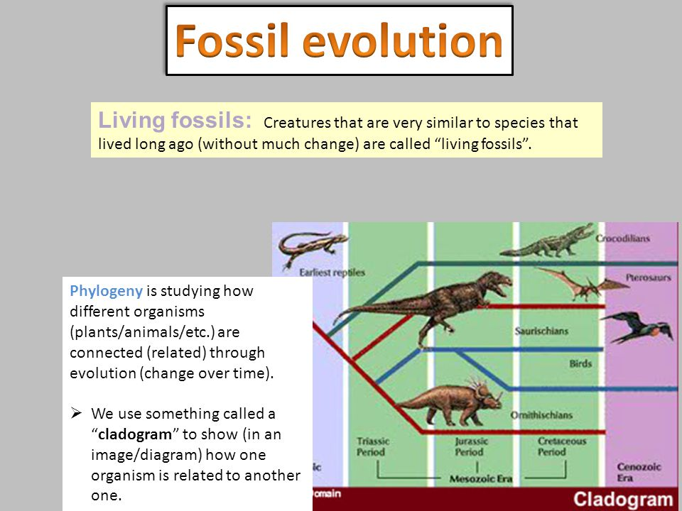 Fossil evolution Living fossils: Creatures that are very similar to species that lived long ago (without much change) are called living fossils .