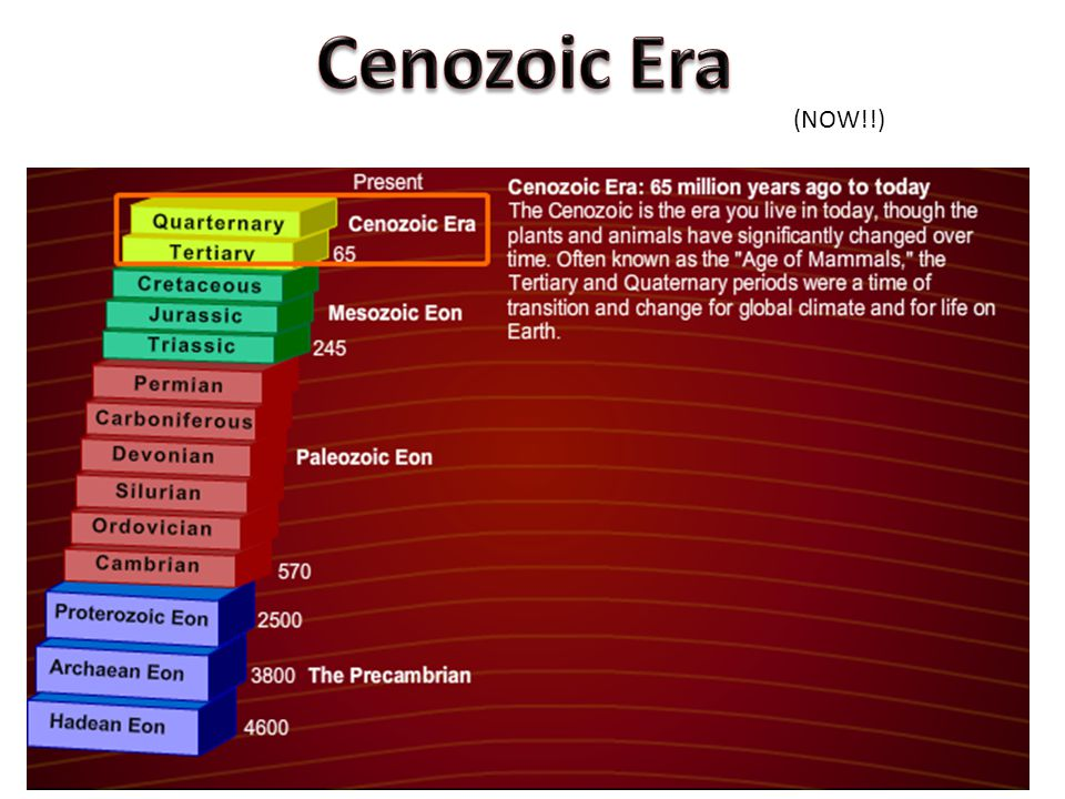 Cenozoic Era (NOW!!)