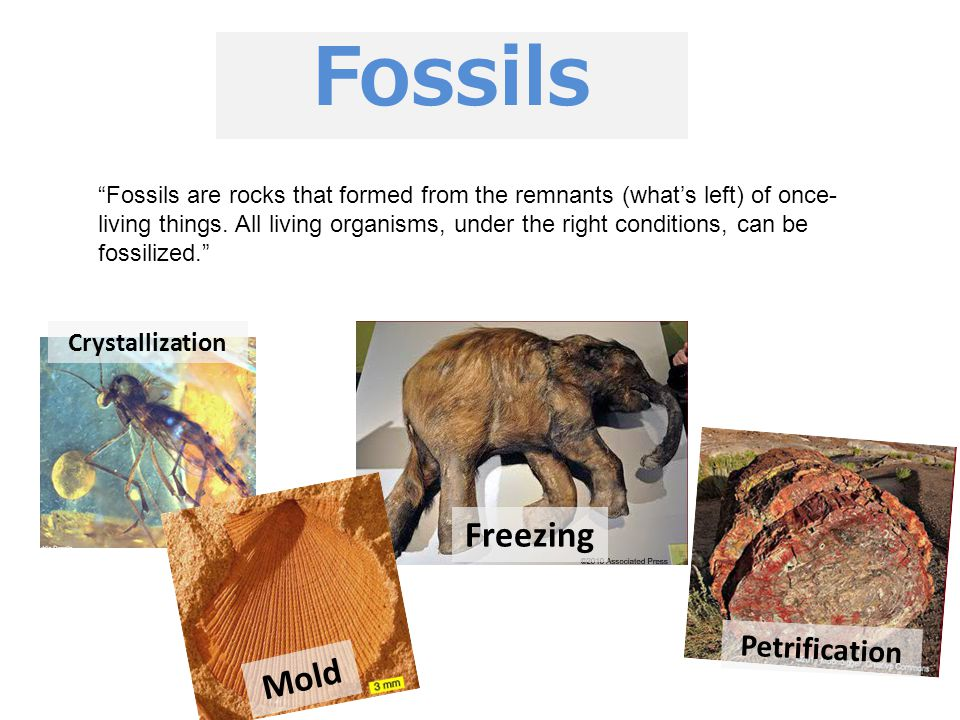 Fossils Freezing Mold Petrification Crystallization
