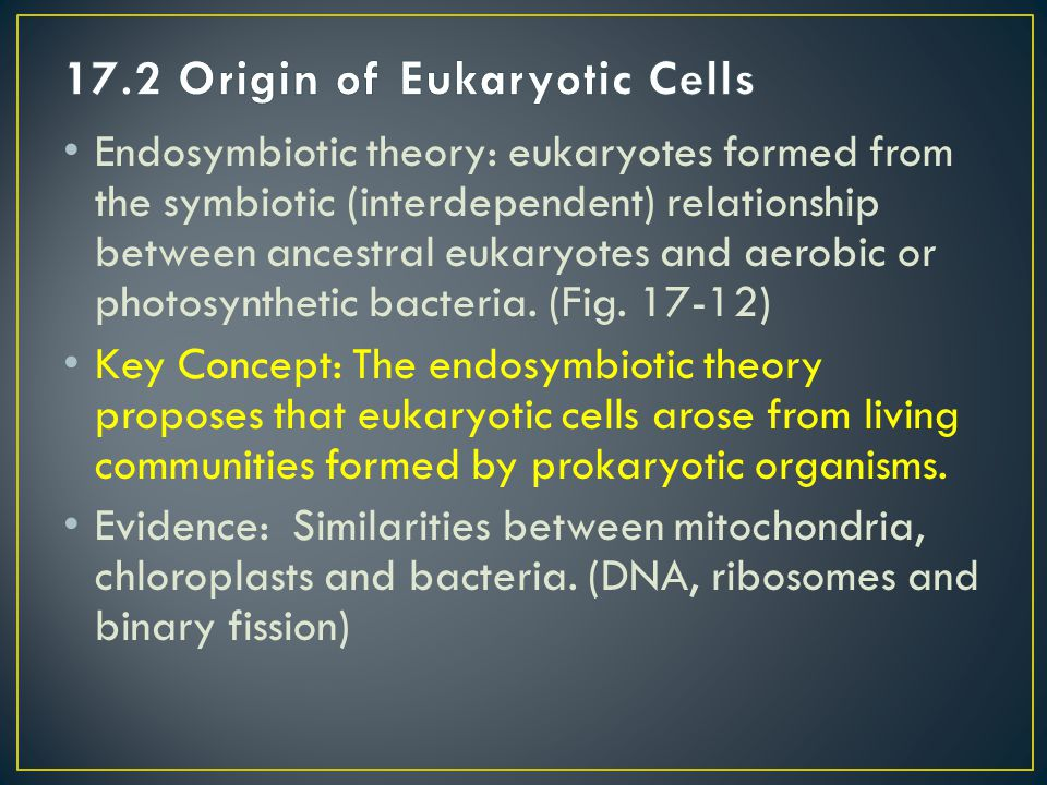 17.2 Origin of Eukaryotic Cells