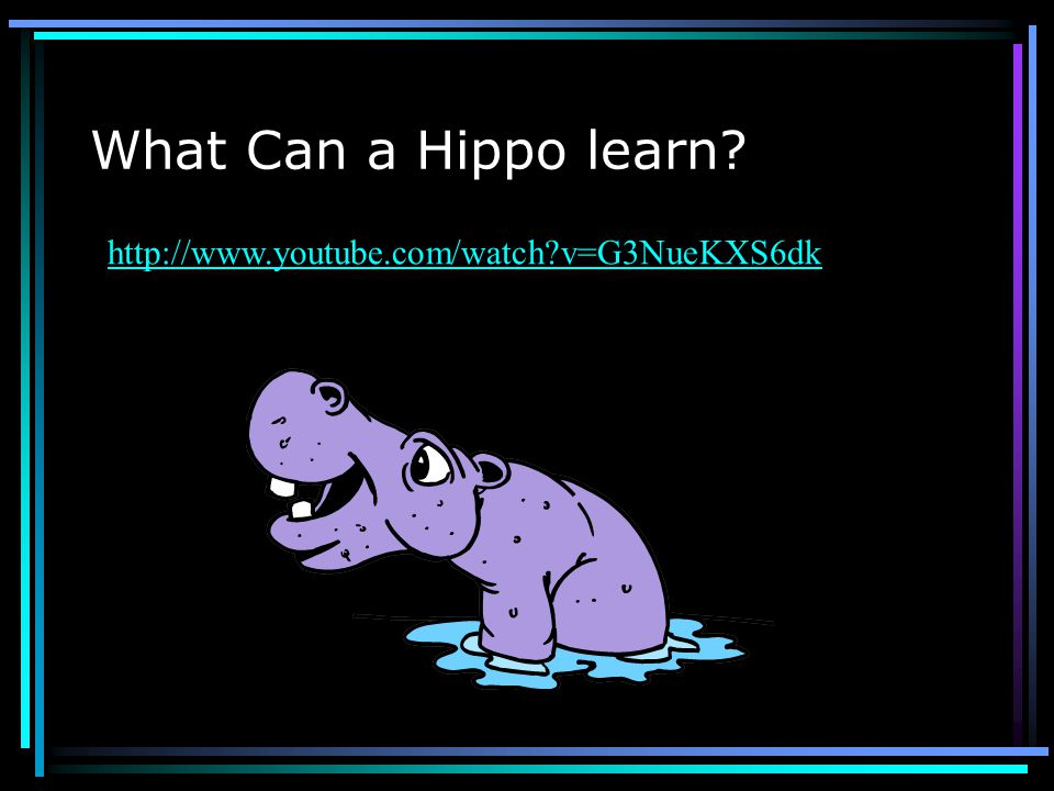 What Can a Hippo learn http://www.youtube.com/watch v=G3NueKXS6dk