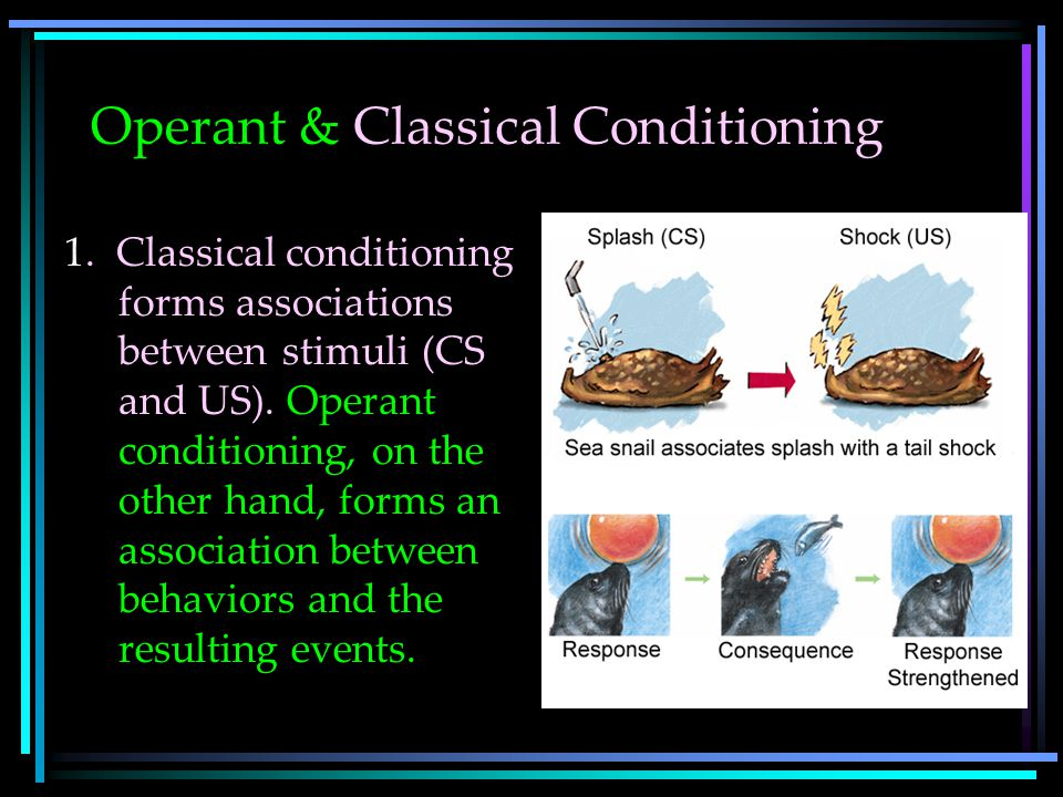 Operant & Classical Conditioning