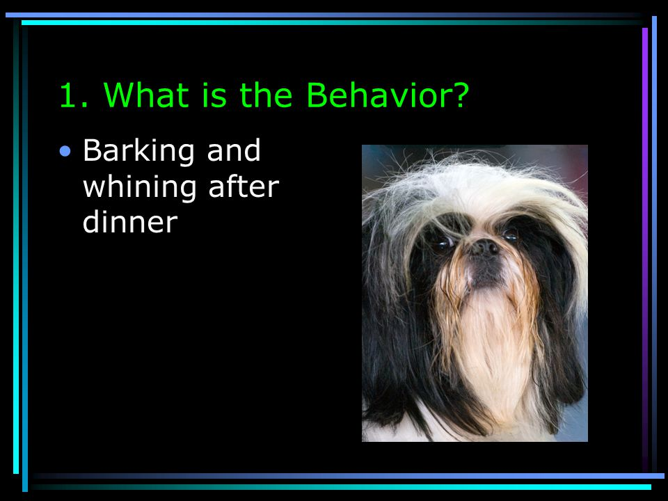 1. What is the Behavior Barking and whining after dinner