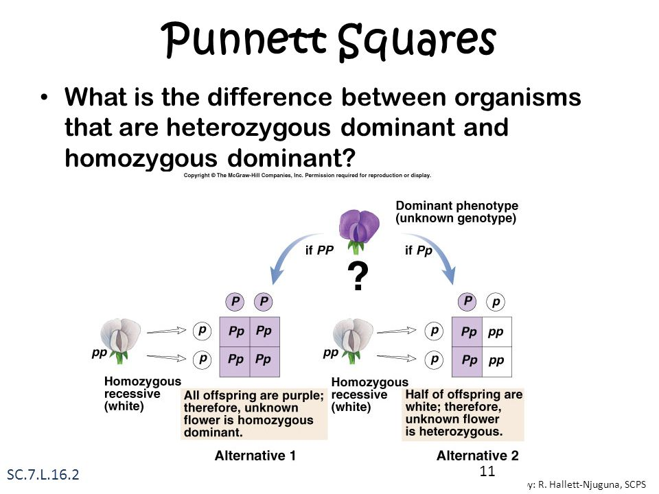 Punnett Squares What is the difference between organisms that are heterozygous dominant and homozygous dominant