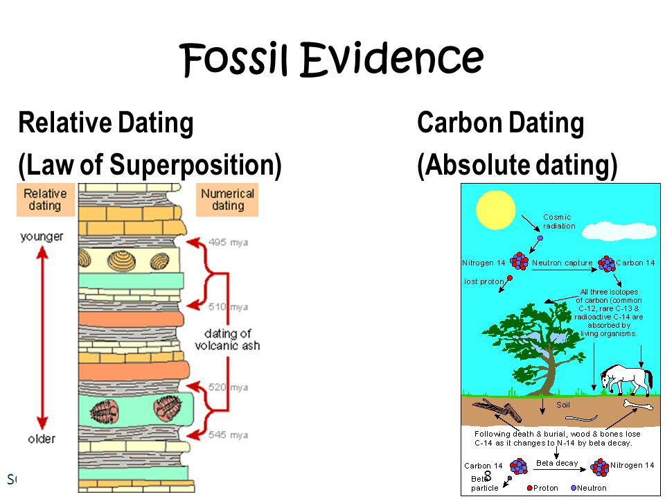 Fossil Evidence Relative Dating Carbon Dating (Law of Superposition) (Absolute dating)