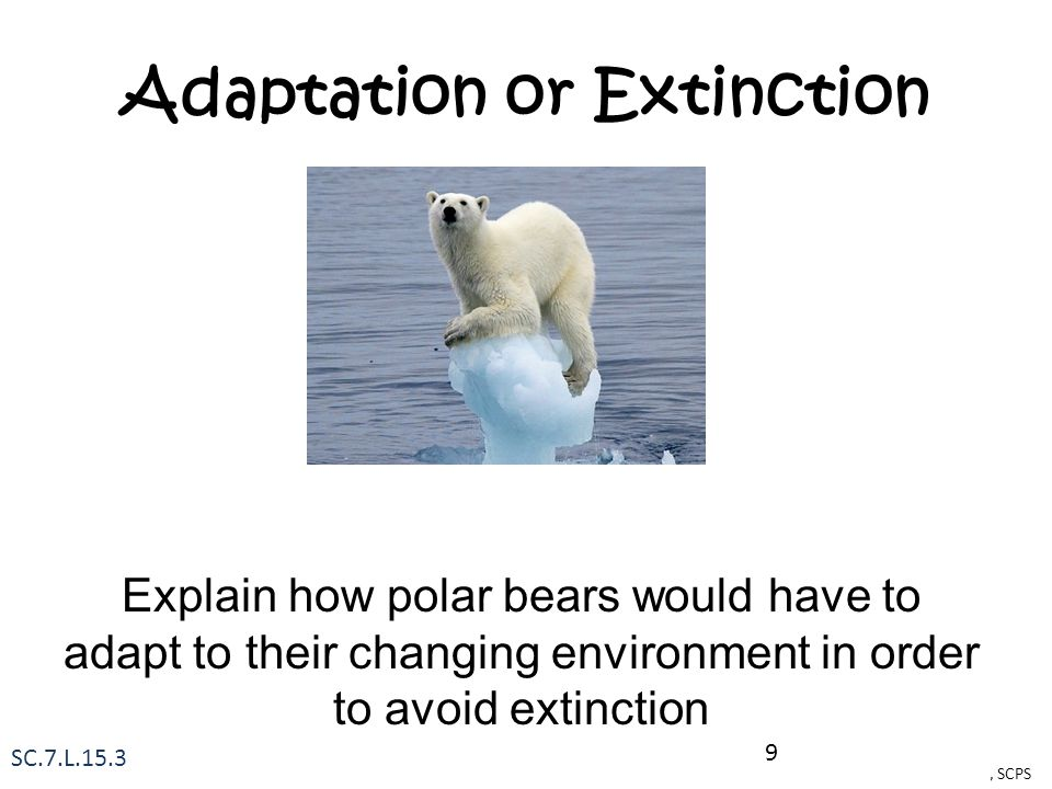 Adaptation or Extinction