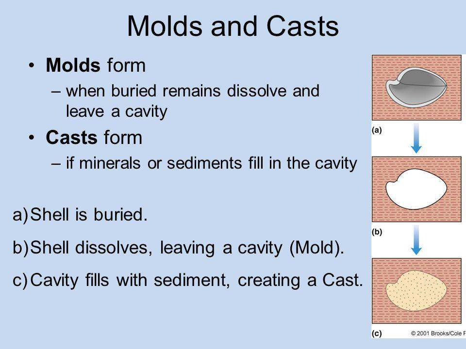Molds and Casts Molds form Casts form Shell is buried.
