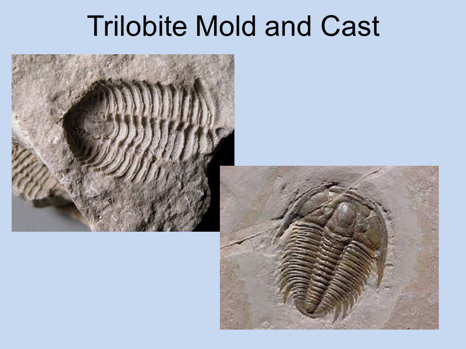 Trilobite Mold and Cast
