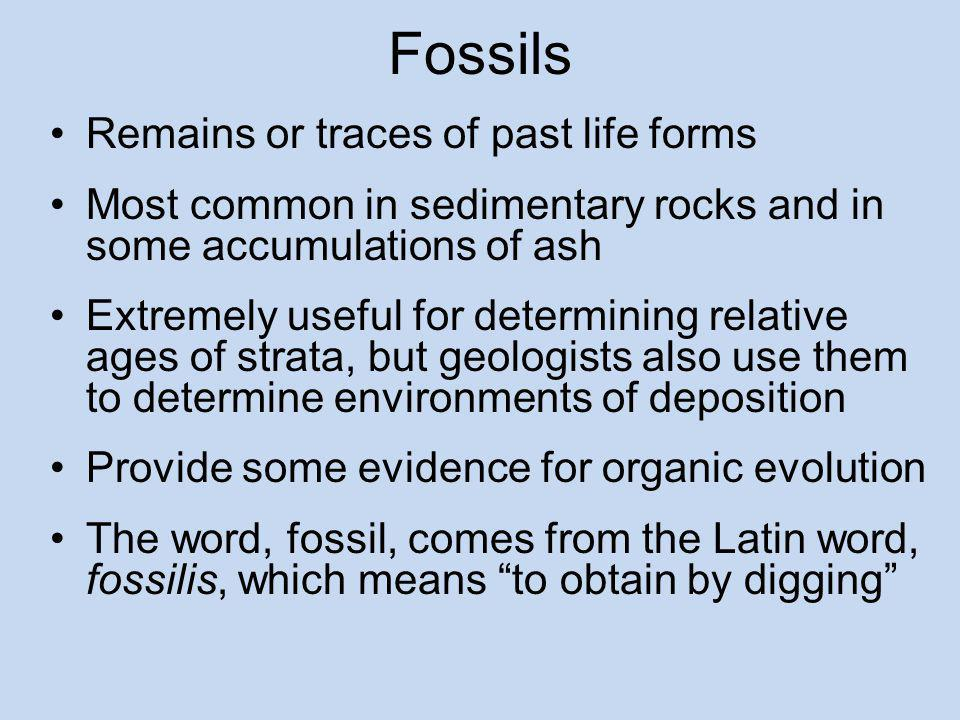 Fossils Remains or traces of past life forms