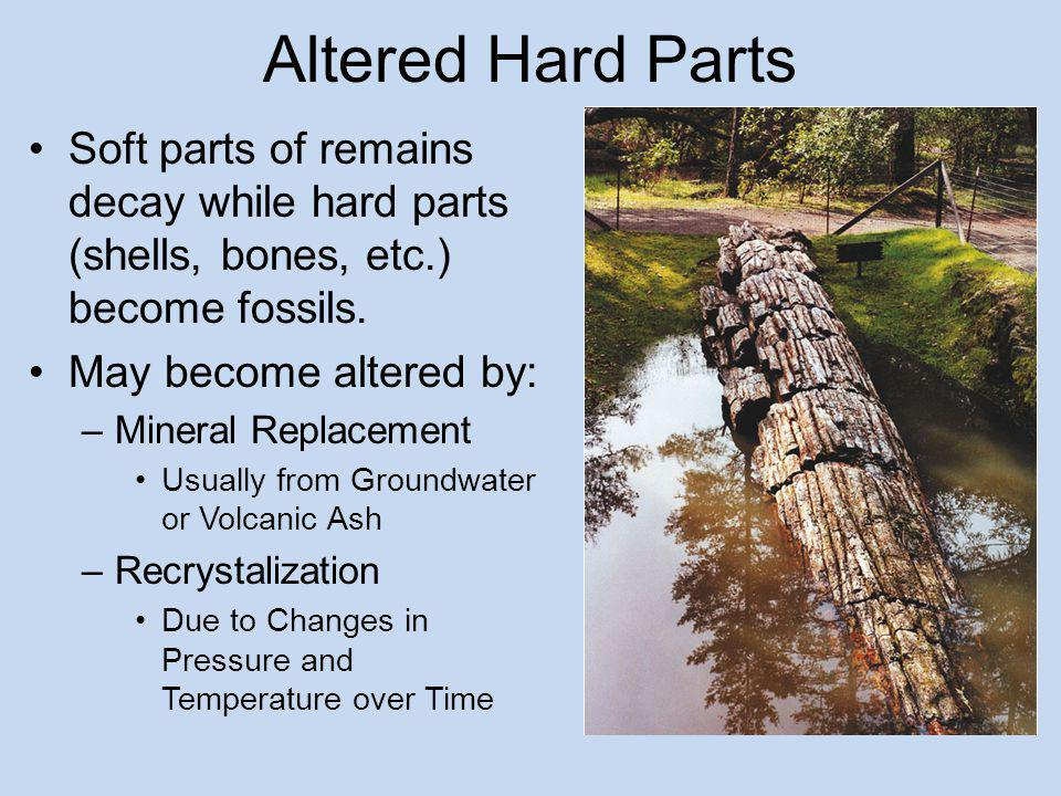 Altered Hard Parts Soft parts of remains decay while hard parts (shells, bones, etc.) become fossils.