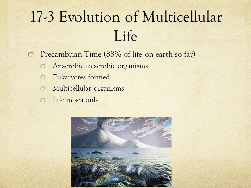 17-3 Evolution of Multicellular Life