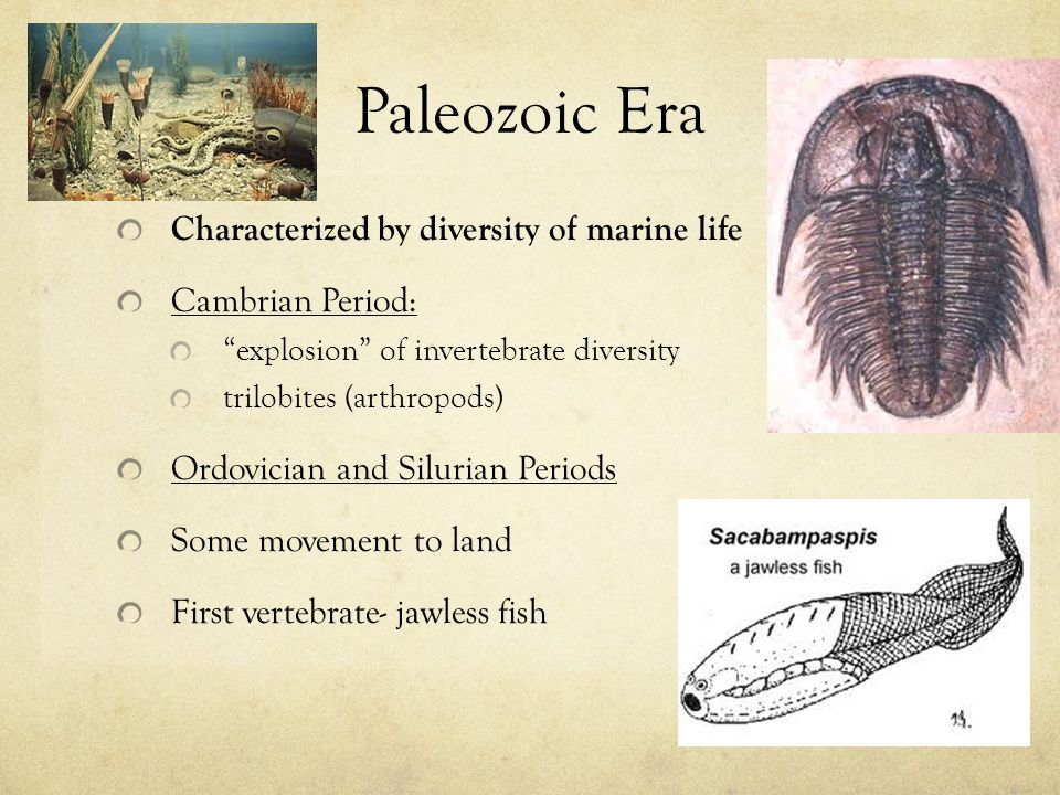 Paleozoic Era Characterized by diversity of marine life