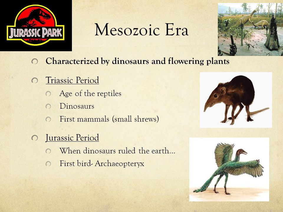 Mesozoic Era Characterized by dinosaurs and flowering plants