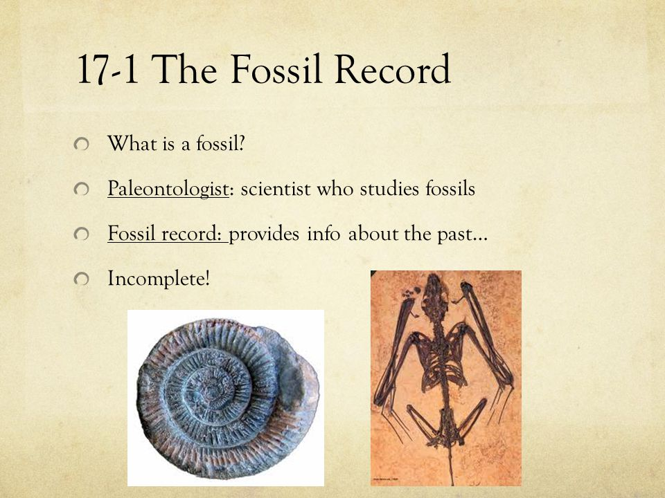 17-1 The Fossil Record What is a fossil