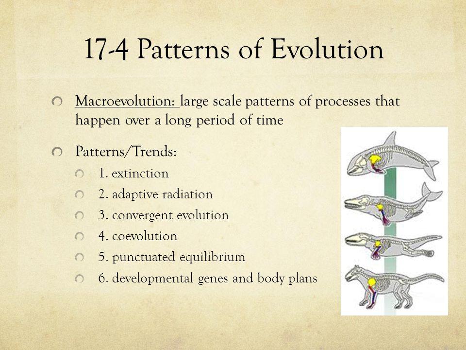 17-4 Patterns of Evolution