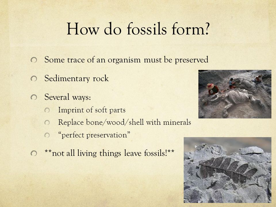 How do fossils form Some trace of an organism must be preserved