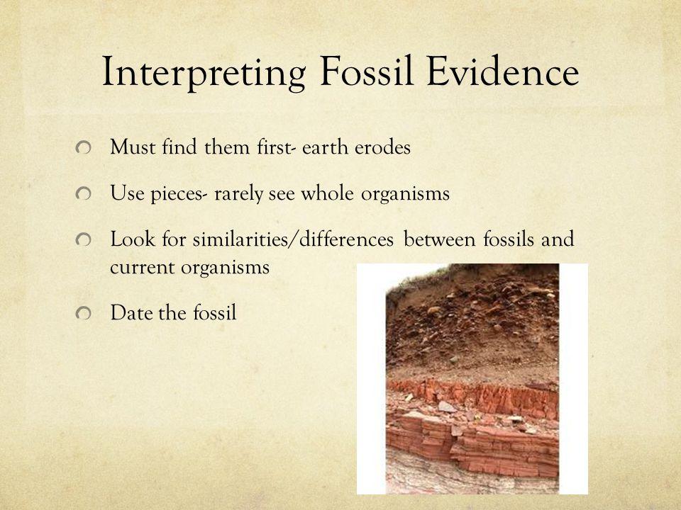 Interpreting Fossil Evidence