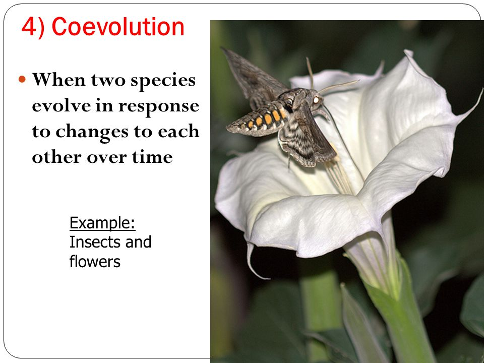 4) Coevolution When two species evolve in response to changes to each other over time. Example:
