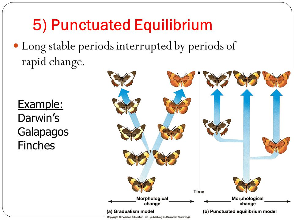 5) Punctuated Equilibrium