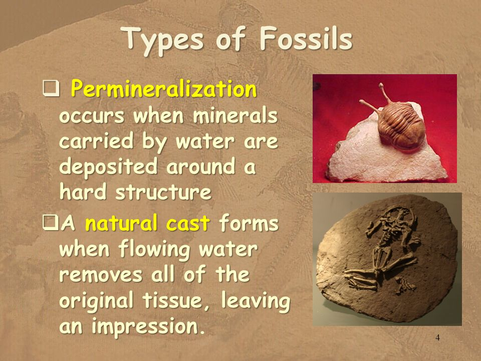 Types of Fossils Permineralization occurs when minerals carried by water are deposited around a hard structure.