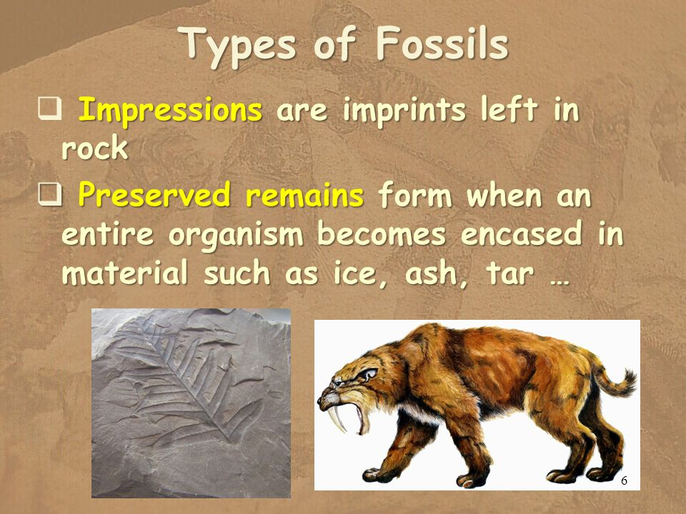 Types of Fossils Impressions are imprints left in rock