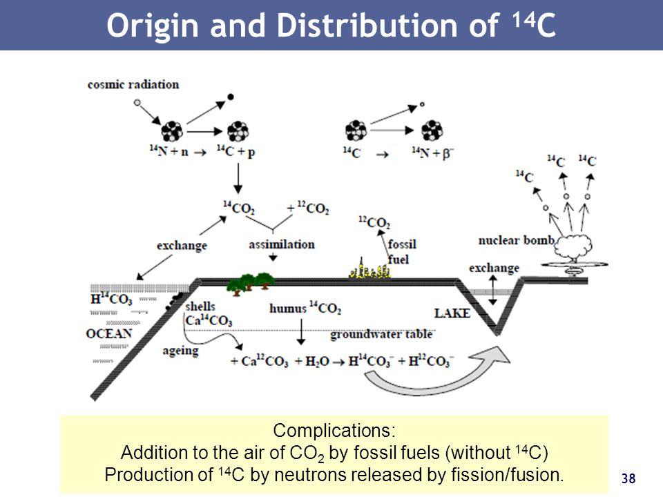 Origin and Distribution of 14C