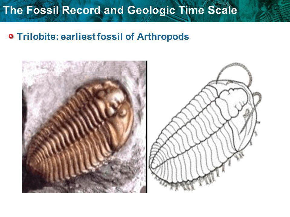 Trilobite: earliest fossil of Arthropods