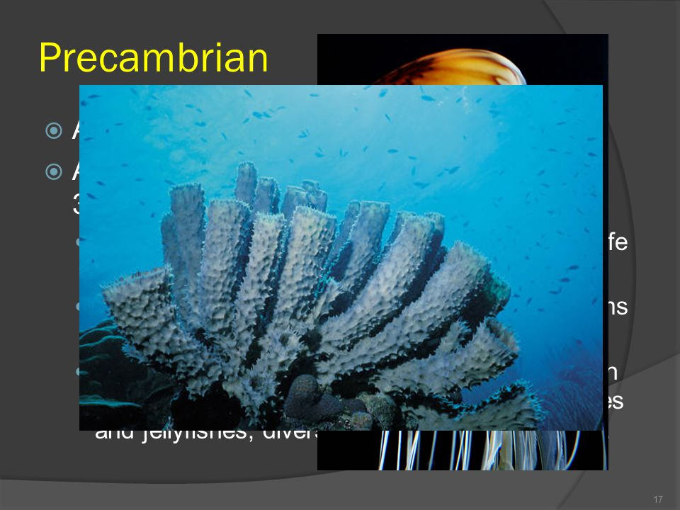 Precambrian Accounts for about 87% of Earth's history.