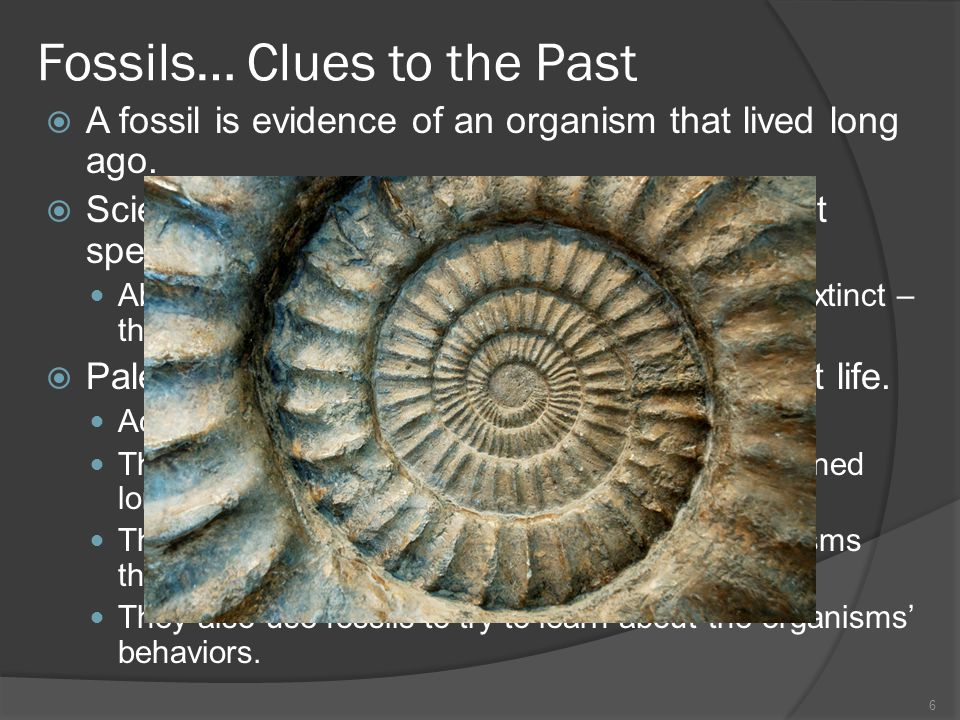 Fossils… Clues to the Past
