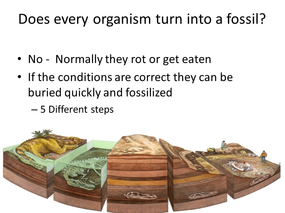 Does every organism turn into a fossil