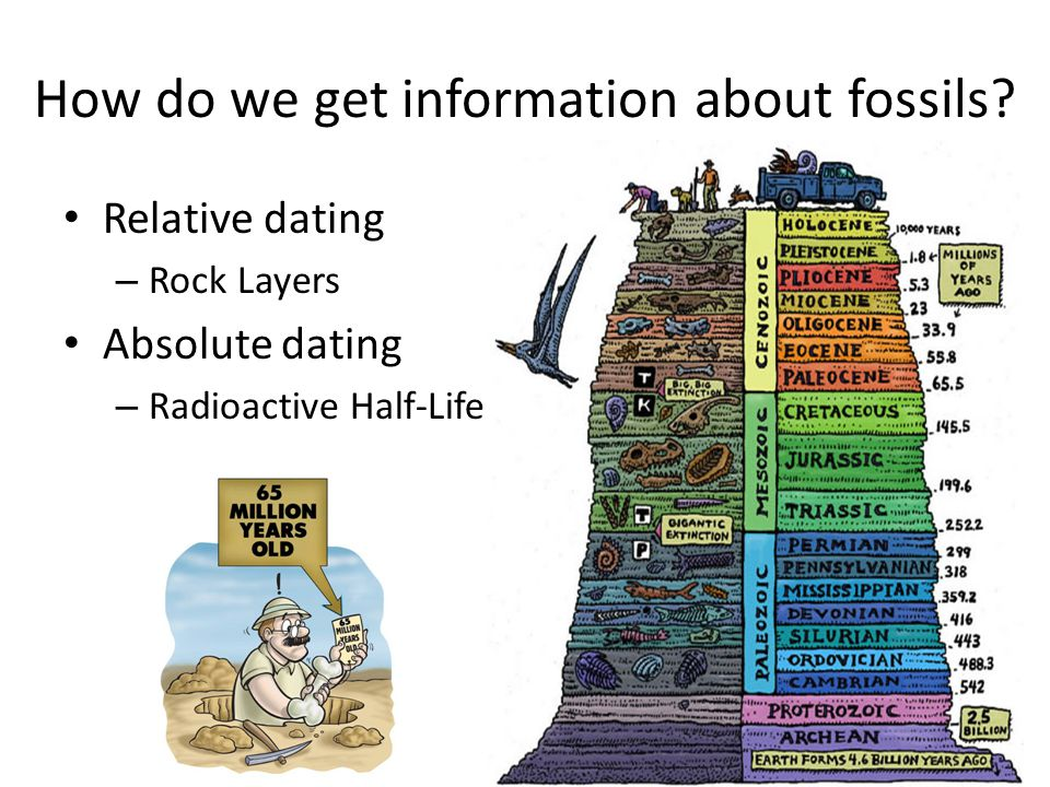 How do we get information about fossils