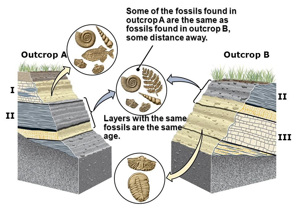 Some of the fossils found in