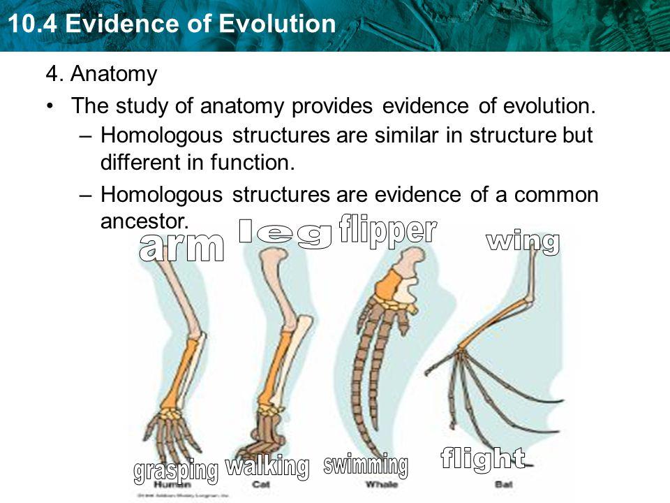 flipper leg wing arm flight walking swimming grasping 4. Anatomy