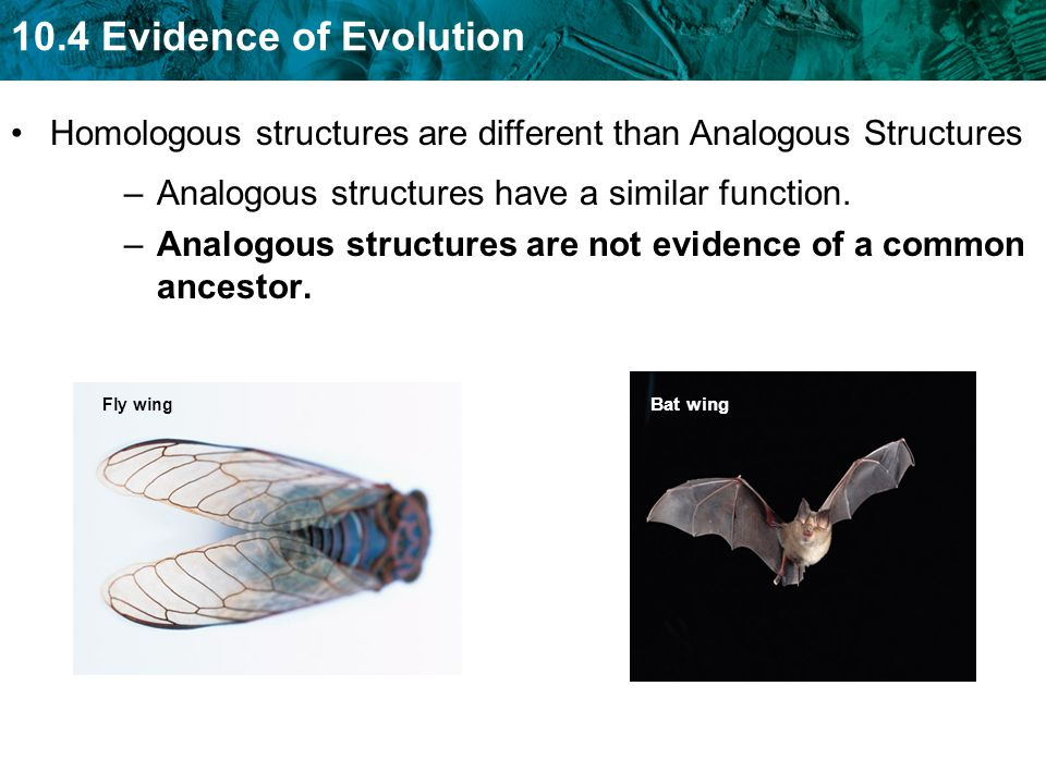 Homologous structures are different than Analogous Structures