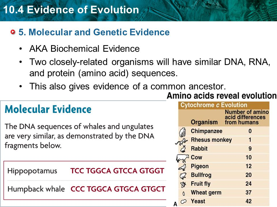 5. Molecular and Genetic Evidence